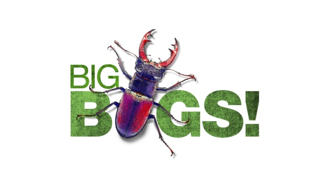 Minnesota Zoo: Big Bugs (2014)